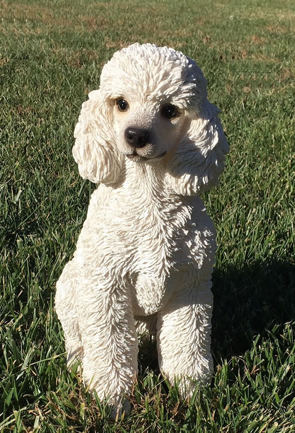 White Toy Poodle Dog Statue- 12 5 U0026quot H  Natures-gallery-all-products  Bc83572
